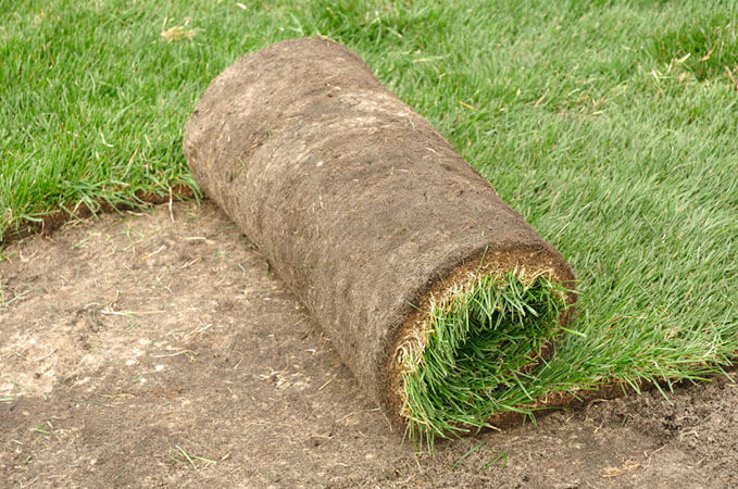 grass-sod-laying-college-station